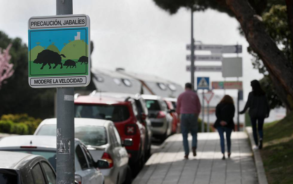 A sign warning of the presence of wild boar in the Madrid suburb of Torrelodones.
