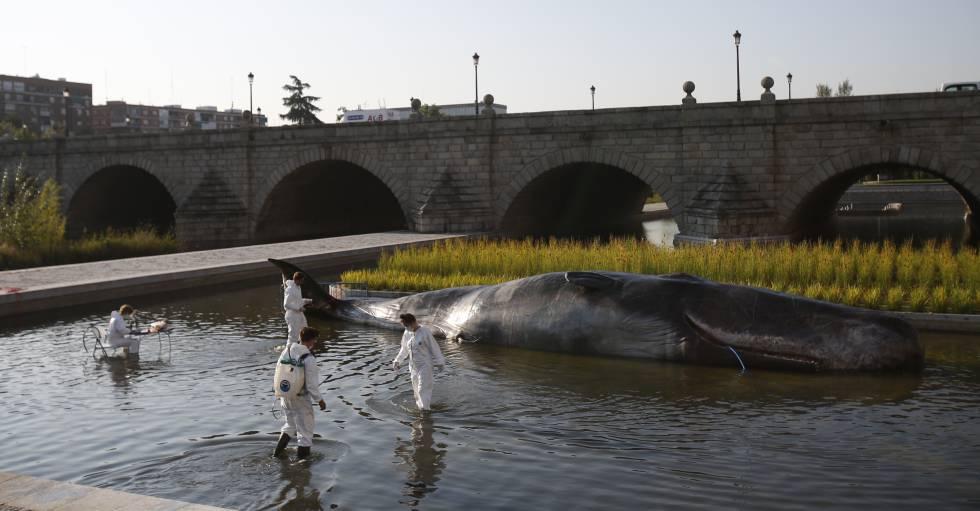 Una instalación artística emula a un cachalote en Madrid Río