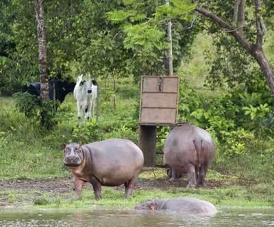 Fotograma de la película  Pablo's hippos (Los hipopótamos de Pablo ).
