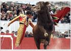 Francia declara los toros patrimonio cultural inmaterial