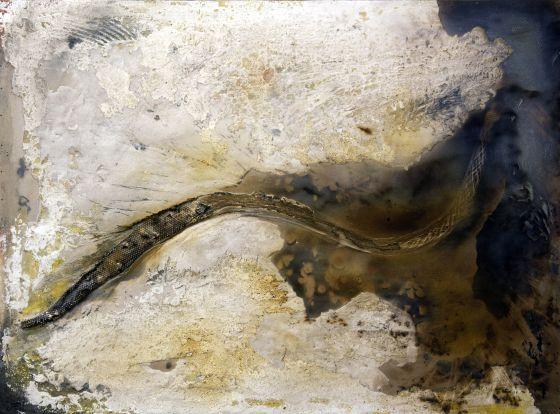 'Anaconda', por la canción homónima de Óscar Mulero.