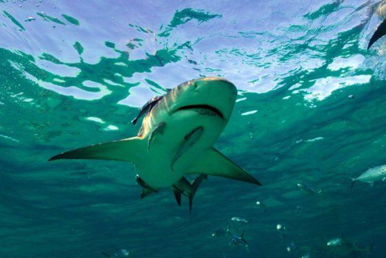 ¡Tiburón a la vista!