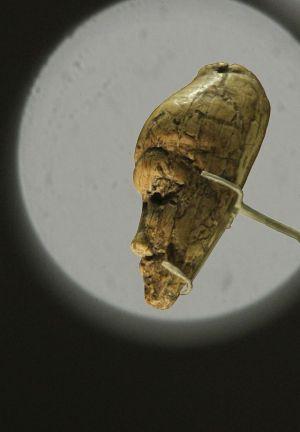 Figura de mujer en marfil de mamut (27.000 años de antigüedad). / AP