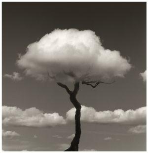 Fotografía del esqueleto de un árbol usando una nube como ramas