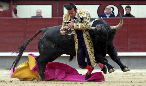 El torero David Mora es corneado por el primer toro en las Ventas.