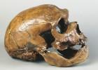 La larga vida del 'Homo sapiens'
