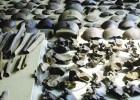 Descubiertos los vestigios de una matanza de las legiones de César