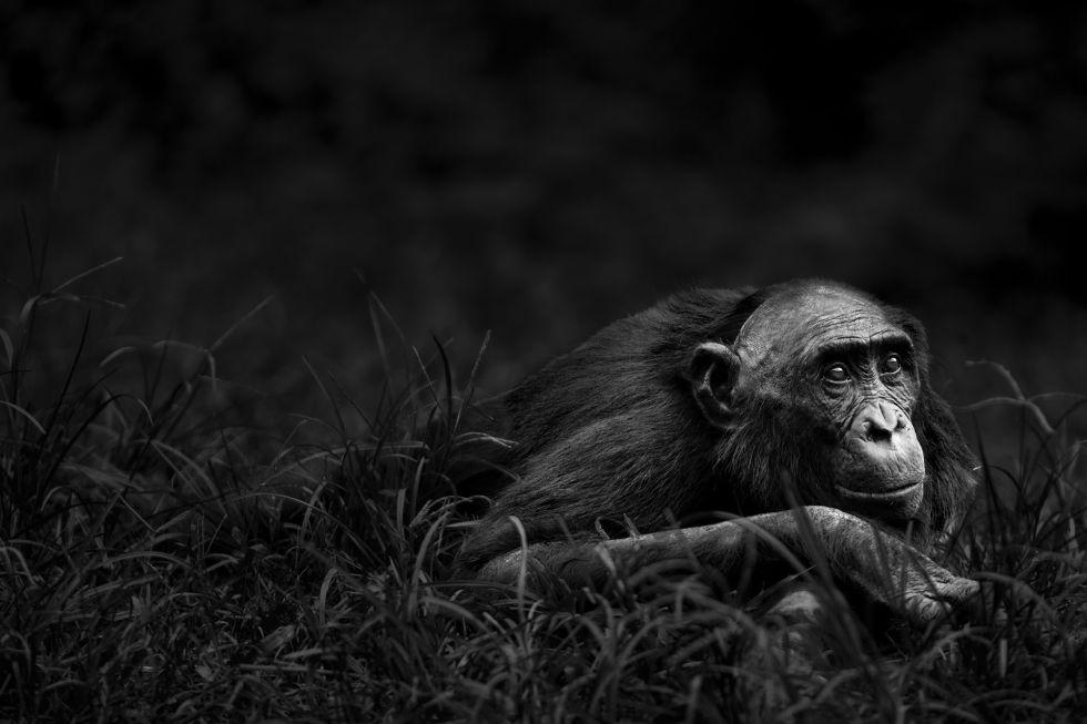 Una de las fotografías de la serie 'Primates' (2015).