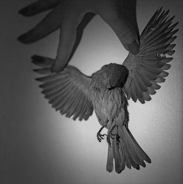 'Crucifixión' (2012), una de las fotografías expuestas por García-Alix.