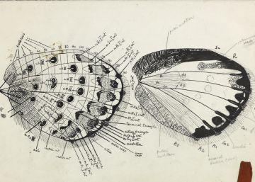 La ciencia de Nabokov
