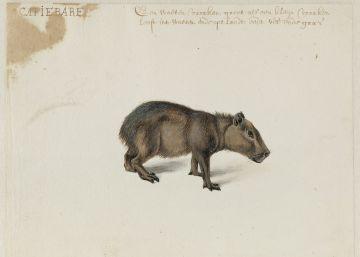 Hallados en Holanda 34 dibujos del viaje a Brasil en 1637 de Frans Post