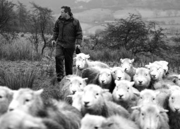 Contar la vida oveja a oveja