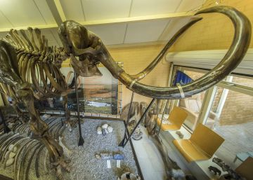 Un mamut en el garaje