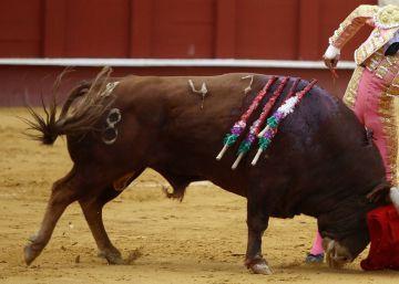 Eliminar sangre del toro es la antesala de la desaparición de la tauromaquia