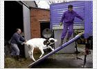 Un nuevo test de orina logra detectar el mal de las 'vacas locas' en las reses vivas