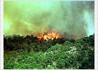 300 evacuados y 500 hectáreas quemadas en el parque natural de Cazorla