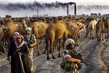 Soldados británicos, junto a una caravana de camellos conducida por comerciantes en Irak.