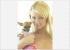 Paris Hilton se afana por recuperar su chihuahua