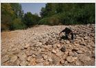 El cauce del río Jarama está seco en el entorno de Torremocha y Torrelaguna