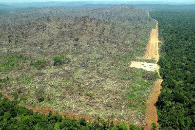 Brasil anuncia que se ha reducido la tala de rboles en la for Tala de arboles madrid