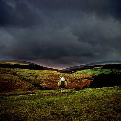 El verde paisaje de Gales es el telón de fondo de un viaje culinario para degustar los quesos y platos de la región.
