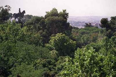 Copas de los árboles del parque del Retiro, con el monumento de Alfonso XI al fondo.