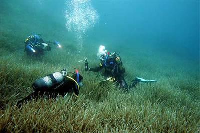 Los investigadores toman muestras para estudiar la regresión de las praderas de posidonia en el Mediterráneo.