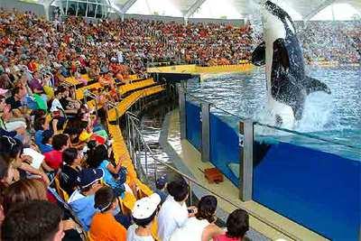 Una de las orcas de Loro Parque salpica a los espectadores.