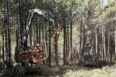 Tala de árboles para construir un campo de golf en Las Navas del Marqués (Ávila).