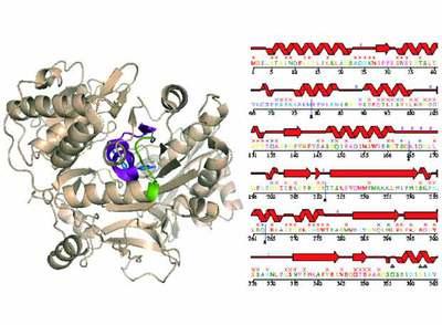 Modelo de la estructura tridimensional de una proteína  junto al esquema de una de las regiones  genéticas estudiadas en el proyecto Encode.
