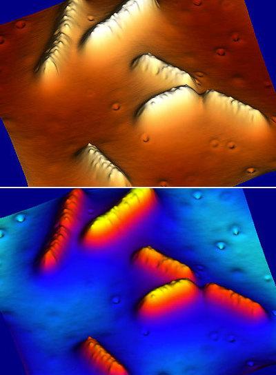 Bacterias  Geobacter  en superficie de grafito en dos coloraciones diferentes para realizar experimentos.