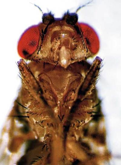 Biografía de una mosca