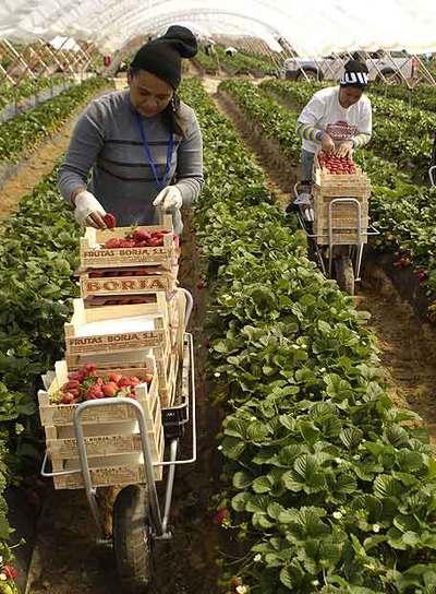 Inmigrantes filipinas, en la recogida de la fresa de Almonte.