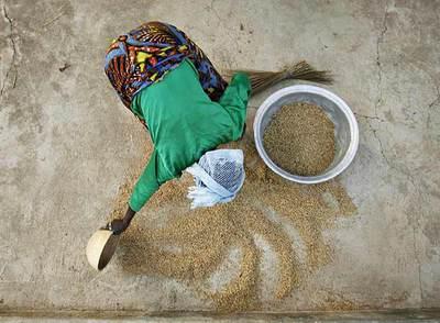 El 75% de los pobres de los países en desarrollo depende de la agricultura, pero la ayuda internacional ha caído durante 20 años.