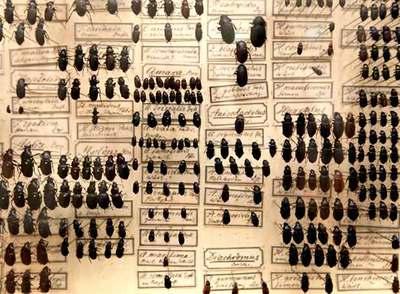 Escarabajos fotografiados en la exposición  Darwin. El arte y la búsqueda de los orígenes,  que se celebra en el museo Schirn de Francfort.