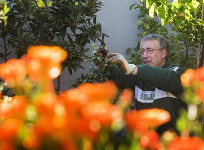 Ignacio Fernández Toxo, floricultor con pedigrí, en la terraza de su casa, en Madrid.