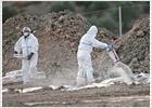La gripe aviar H7 lleva a sacrificar 320.000 gallinas en Guadalajara