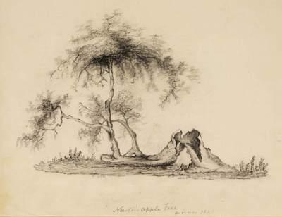 Un manzano del jardín de Newton, dibujado en 1840.