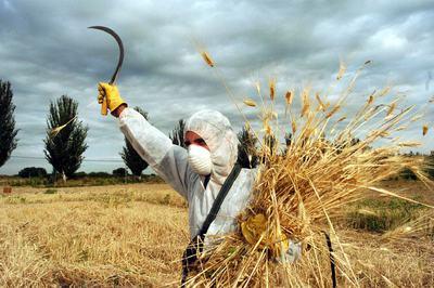 Protesta ecologista contra un campo de maíz transgénico en Lleida.