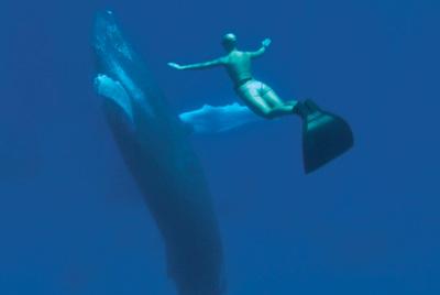 El buceador en apnea Mandy-Rae Cruickshank, en una imagen de  The cove.