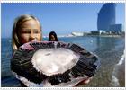 Las medusas también van a la playa