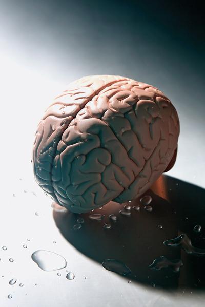 Cerebros ... y cerebras