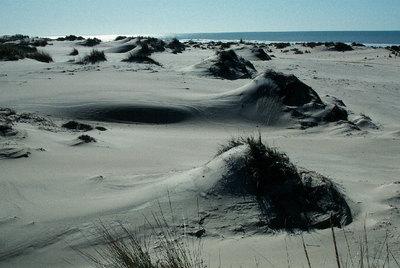 Medio Ambiente ha declarado dominio público todo el cordón de dunas del litoral del Parque Nacional de Doñana.