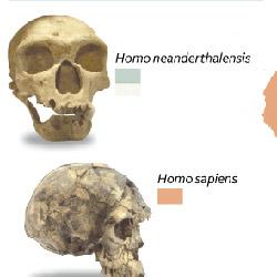 El primo del neandertal