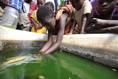 En Malindi (Kenia), los vecinos atraen con agua a los mosquitos.