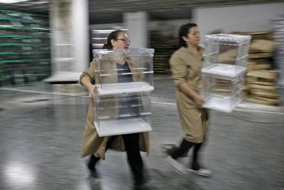 La carrera de las urnas