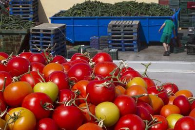 Tomates y pepinos destinados al vertedero por el bloqueo comercial.