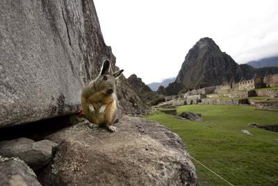 Con un bicho en Machu Picchu