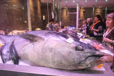 Un atún rojo de 162 kilos. Las grandes especies son migratorias por lo que el riesgo existe en cualquier caladero.