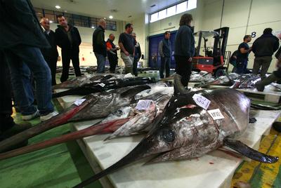 Ejemplares de pez espada en la lonja de Vigo.
